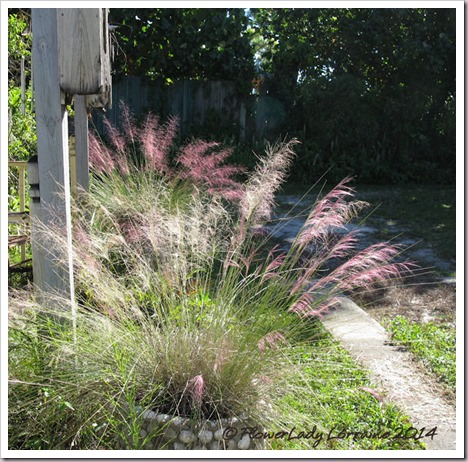 11-04-pink-muhly-3