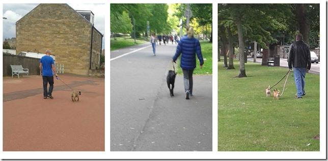 3-dog-walking