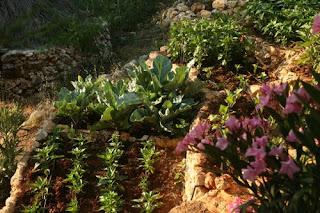 Eflatun-bahçe 136_500_333