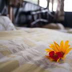 Gorilla Mist Camp, Blumengruß aus dem Bett © Foto: Marco Penzel | Outback Africa