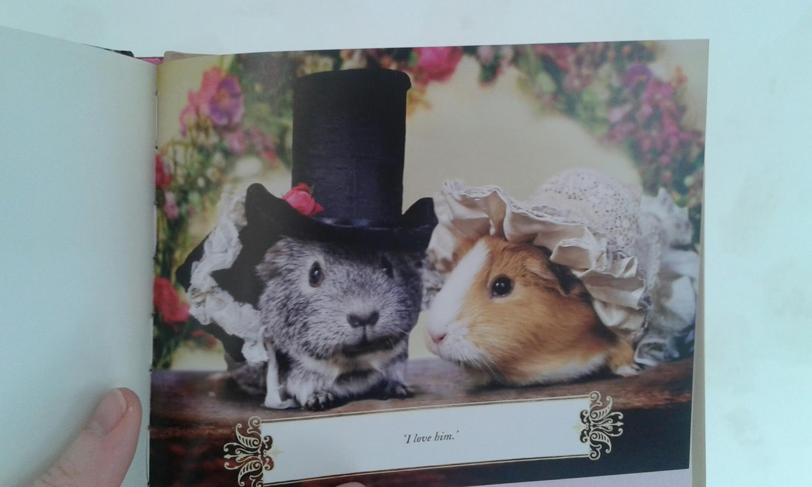 from Ray book about gay guinea pigs