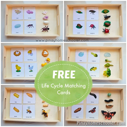 FREE Life Cycle Matching Cards