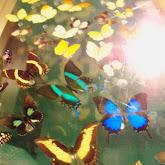 Houston Museum of Natural Science - 116_2863.JPG