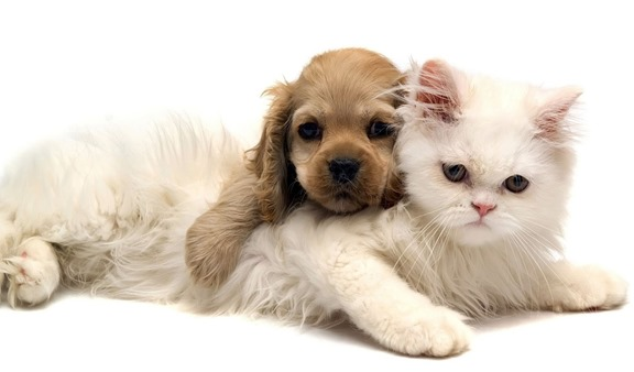 Dog and Cat-wallpaper