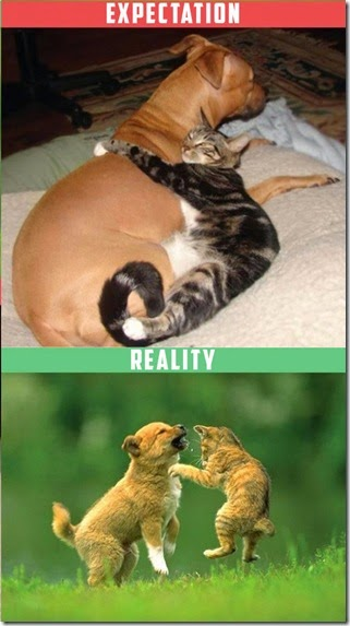 cats-expectations-reality-001