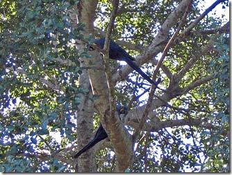 passo-do-lontra-pesca-arara-azul