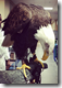 Click to enlarge this thumbnail of Louis the Eagle on the St. Charles Convention Center Facebook page