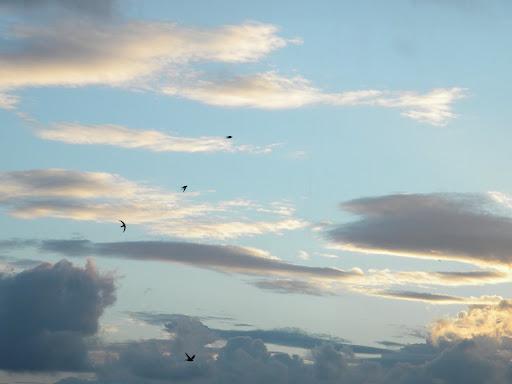 Ciel, nuages et hirondelles