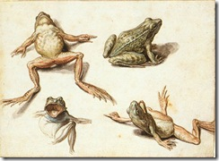 Jacob_de_Gheyn_(II)_-_Four_Studies_of_Frogs_-_WGA08694