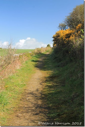 4-Knockbrex-Hill-path