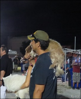 dog on shoulder