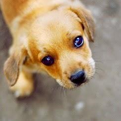 puppy_eyes_by_ciuky