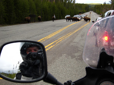 Bison Traffic Jam - They Are A Lot Bigger Than Me and the Bike!