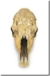 sherrie_levine_steer_skull_un-horned_d5495844h