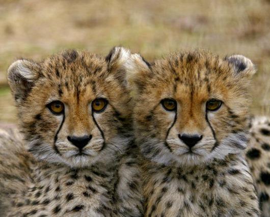 Малыши-близнецы-1