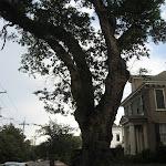 Our walking tour thru the Garden District in New Orleans 07222012-19