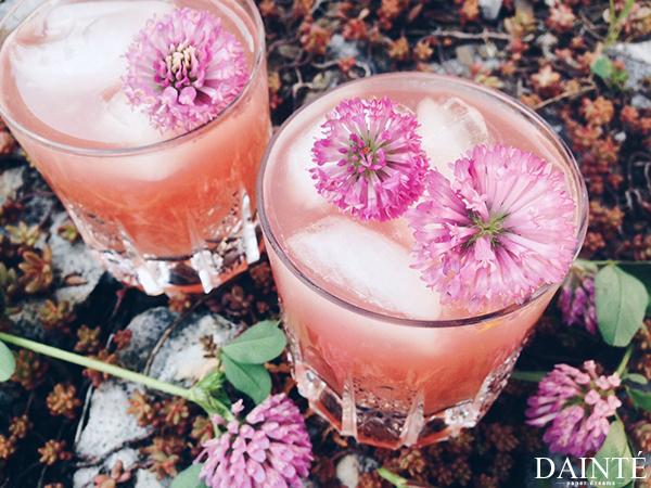 red clover cvetovi limonada napitek 1