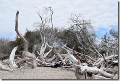 Driftwood trees 2