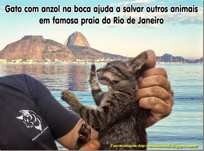 gato_anzol_boca