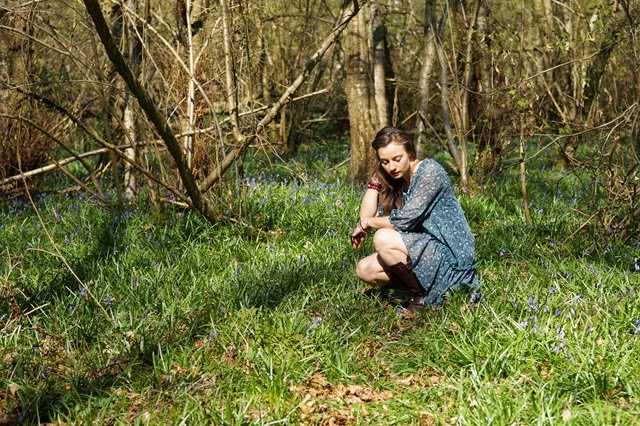 bluebells in the woods in spring