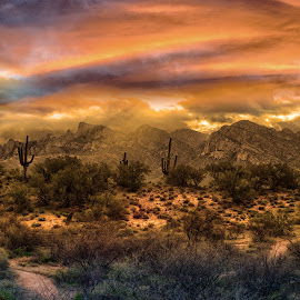Dusty Dawn by Charlie Alolkoy - Landscapes Deserts ( clouds, oro valley, sky, desert, sunset, arizona, sunrise, cactus )
