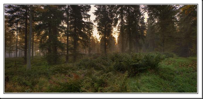 woodpanhdr 1