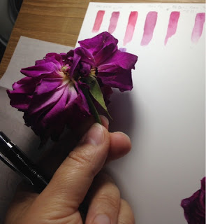 Colour testing for Mustead Wood rose