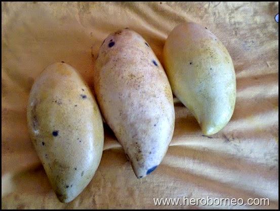 buah mangga best