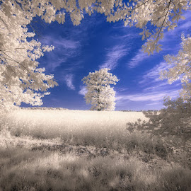 Magic Land by Pawel Uchorczak - Landscapes Prairies, Meadows & Fields ( colza, oak, sunset, infrared, ok, light, poland )