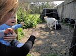 Der var geder på campingpladsen i Klitmøller