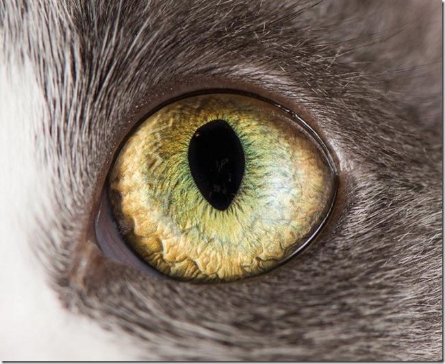 Cats Eyes6