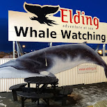Elding Adventure at Sea whale watching located next to the whale steak restaurant in Reykjavik, Hofuoborgarsvaeoi, Iceland