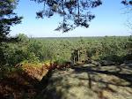 Panorama sur la forêt