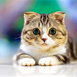 Hello Kitty by Sim Kim Seong - Animals - Cats Kittens