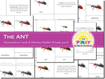Ant 3-part nomenclature cards