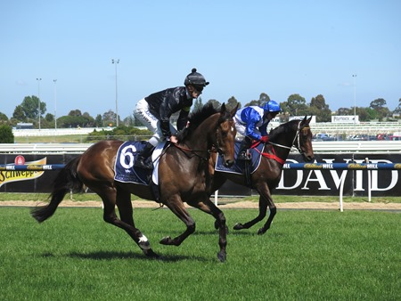 race 4_a little loose_dawnie perfect 1