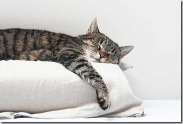 la cura del gatto anziano.