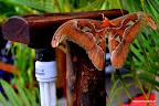 Na wyspie występują endemiczne gatunki roślin i zwierząt