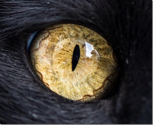 Cats Eyes7