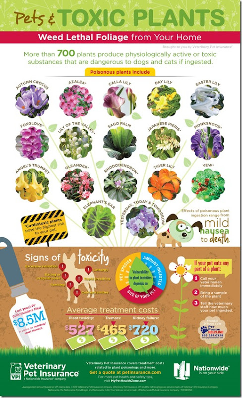 Toxic-Plants-Infographic2015