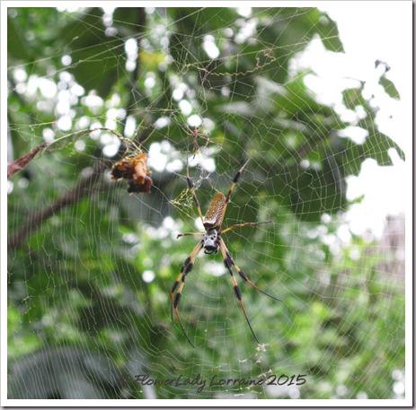 07-16-spider