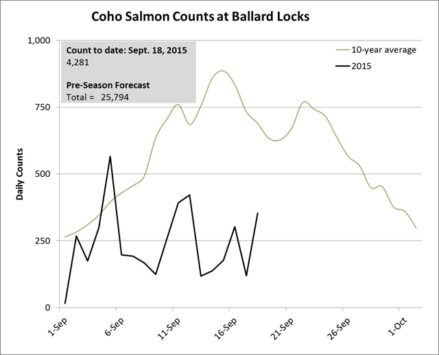 Coho salmon counts at Ballard Locks, 1 September 2015 - 18 September 2015. Graphic: WDFW