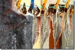peixe seco (5)