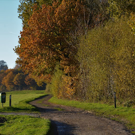 Take a walk by Els He - Landscapes Forests ( autumnlovers, autumn, belgium, werm, hoeselt,  )