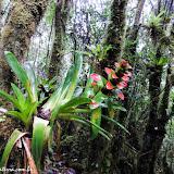 Parque Podocarpus - Vilcabamba, Equador