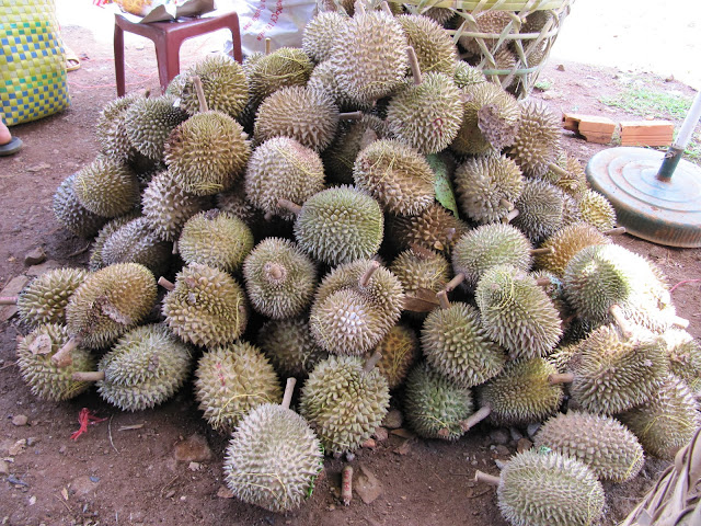 Durian - they smell like crap!