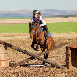Horse jumping by Morne Kotze - Sports & Fitness Other Sports