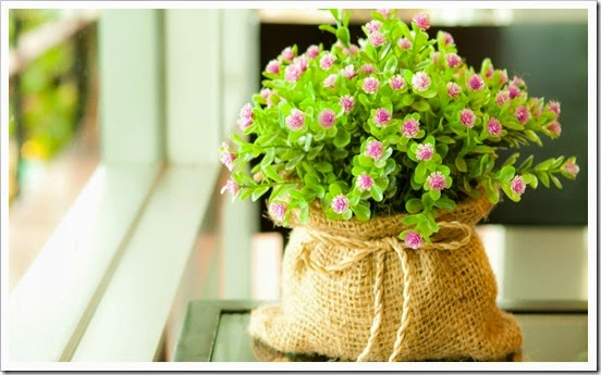 potted_flowers_in_front_of_the_window_1920x1080_hd-wallpaper-1855796