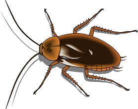 cockroach-cosmetics-