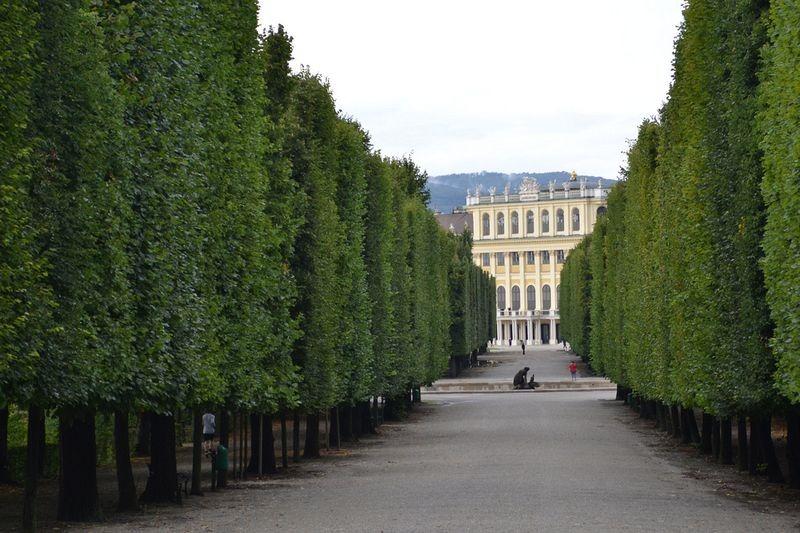 schönbrunn-palace-trimmed-trees-6